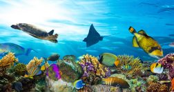 great_barrier_reef_web